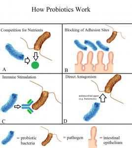probiotics-mental-health-depression
