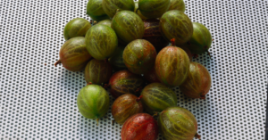 Use gooseberry as a natural solution to PCOS symptoms